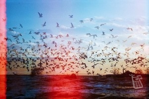 The Cinematic Orchestra  – Arrival of the Birds
